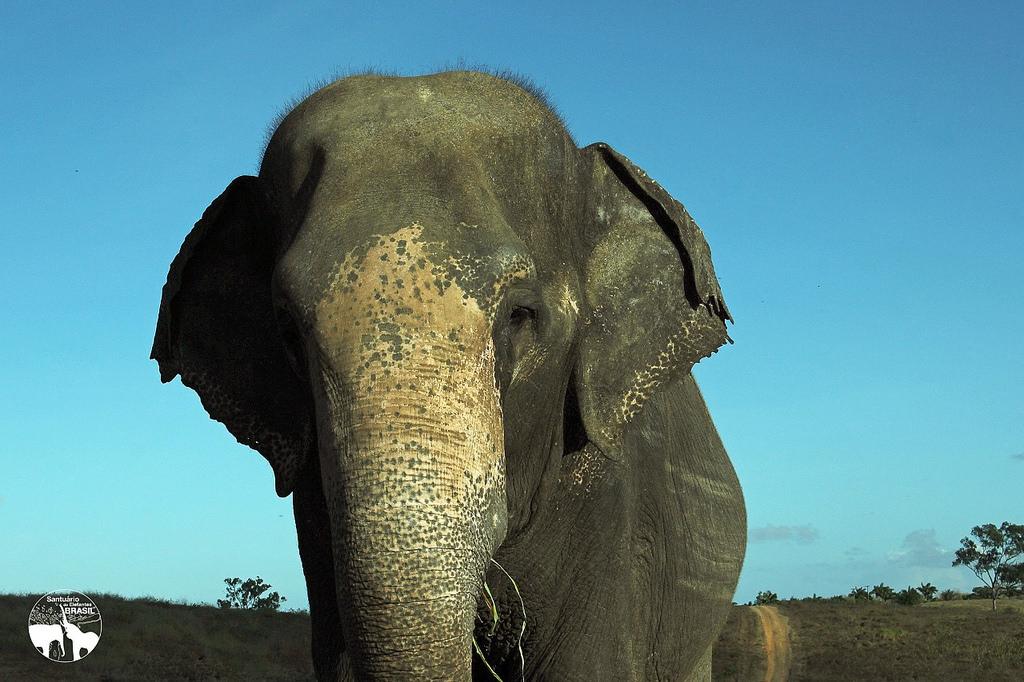 Rana será a terceira resgatada do Santuário de Elefantes em MT