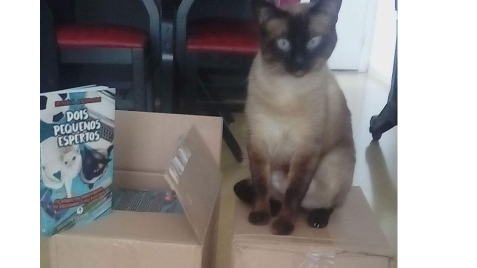 Livro Dois Pequenos Espertos – os gatinhos que brincam com a tecnologia