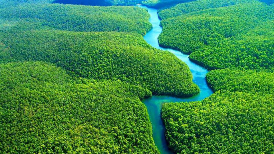 Amazônia: como podemos efetivamente ajudar?