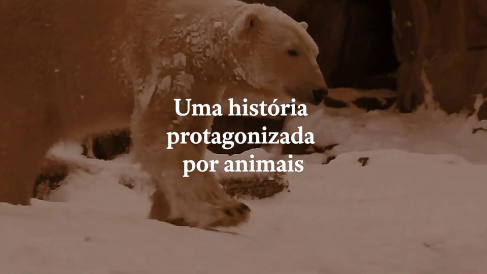 Escritora japonesa Yoko Tawada lança Memórias de Um Urso-Polar, em São Paulo