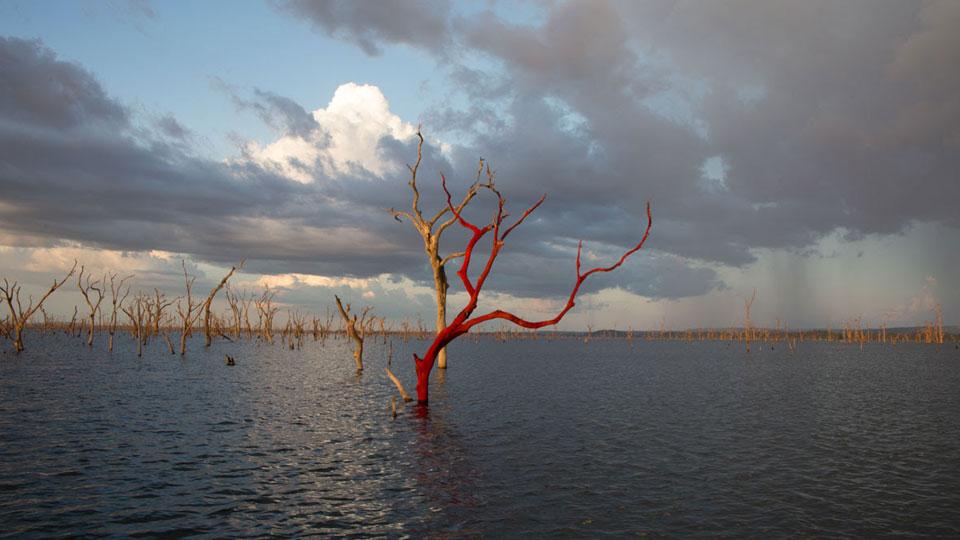 Rio recebe exposição de obras produzidas em residência artística na Floresta Amazônica